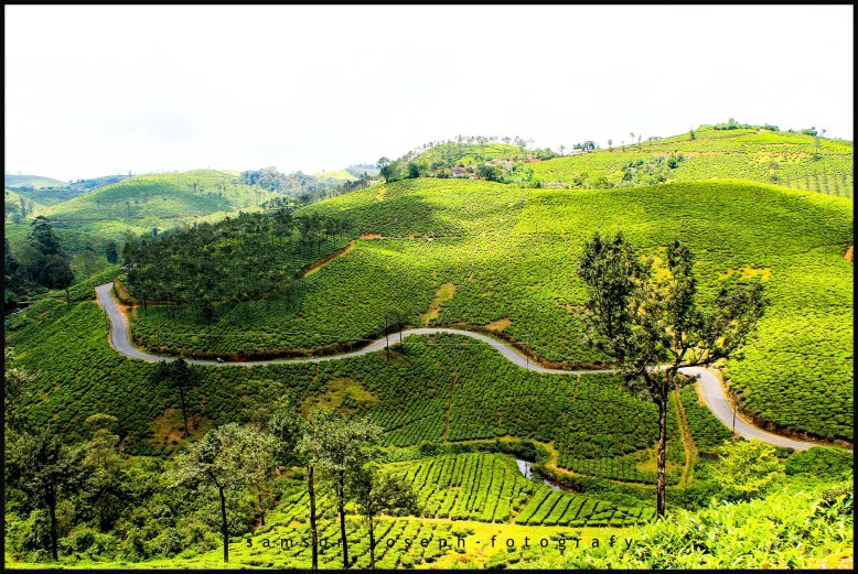 Not the private estate road but state highway connecting Elappara - Vagamon
