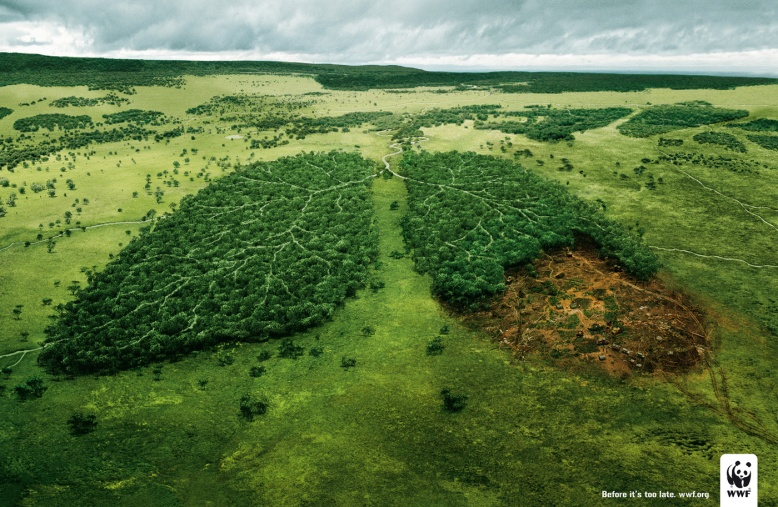 wwf-lungs